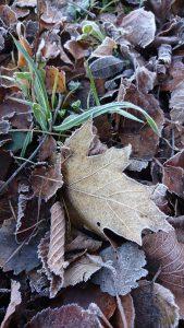Aus Herbst wird Winter
