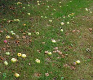 Obstgarten Boule